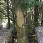 15_the-grave-of-edoardo-menz