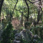 2_the-jungle-of-the-jewish-cemetery